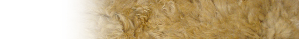 Alpaca Fur Clothing Catalogue Banner