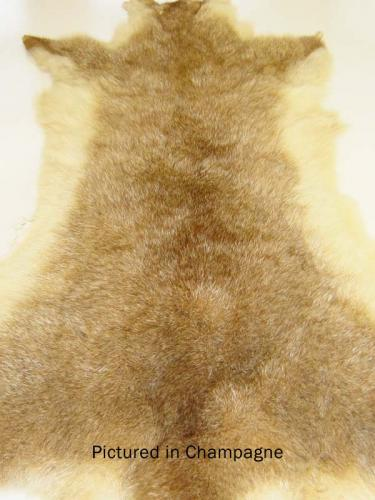 Champagne Possum Fur Hide
